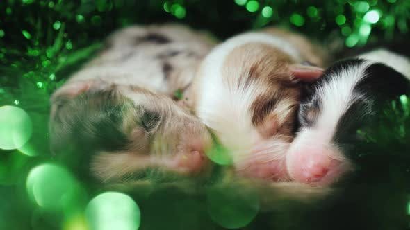 Cover Image for Three Newborn Puppies Are in the Green Decorations on the Day of St. Patrick