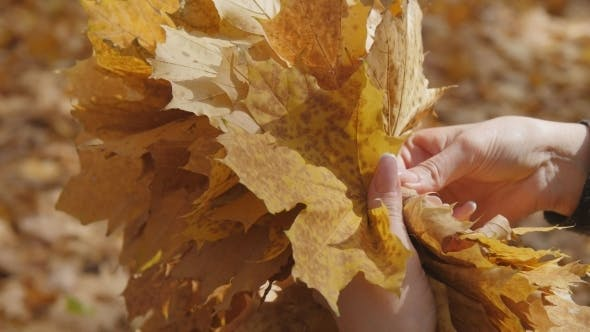 Thumbnail for Make Up a Bunch Of Leaves