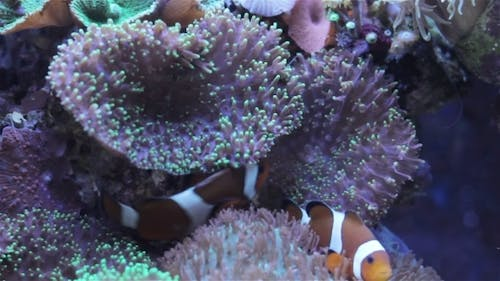 Coral And Underwater Marine Life.