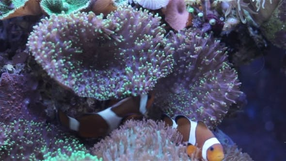 Thumbnail for Coral And Underwater Marine Life.
