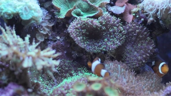 Thumbnail for Coral And Underwater Marine Life