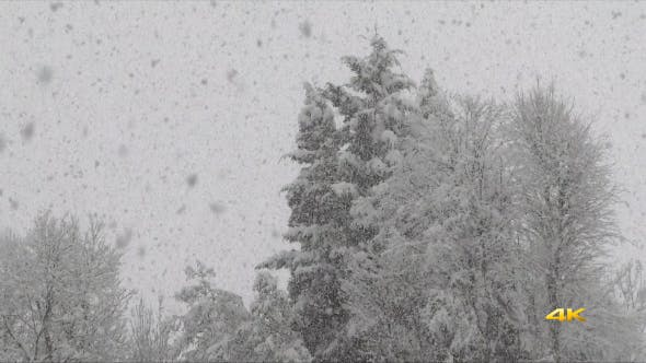 Thumbnail for Heavy Snowfall