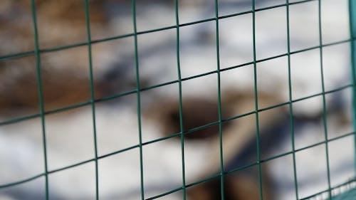 Tiere in Gefangenschaft im Zoo