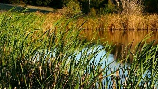 Thumbnail for Beautiful Lake 3