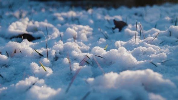 Thumbnail for Snow On The Grass In Evening