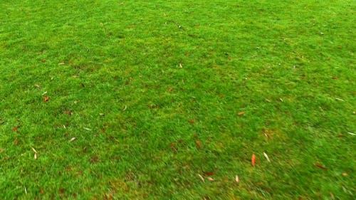 Walking Fast on Grass Ground