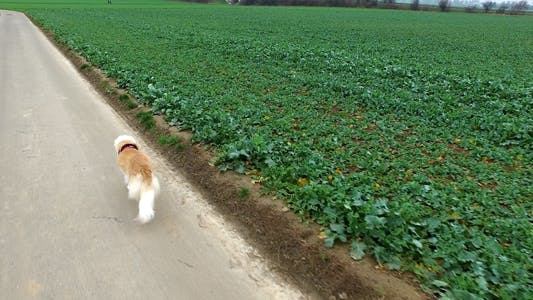 Thumbnail for The Dog is in the Field