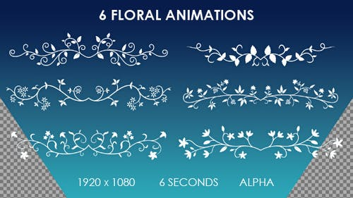 6 Floral Ornamental Animations