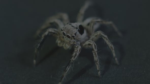 Cover Image for Spider