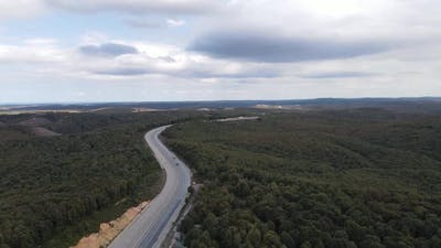 Drone Shot Forest Road
