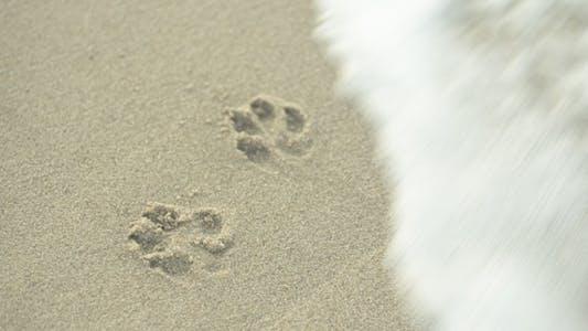 Thumbnail for Footprints on the Beach