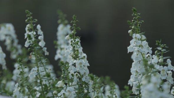 Thumbnail for White Flowers