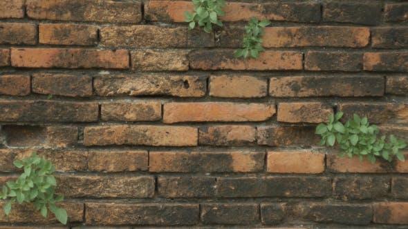 Thumbnail for Brick Wall