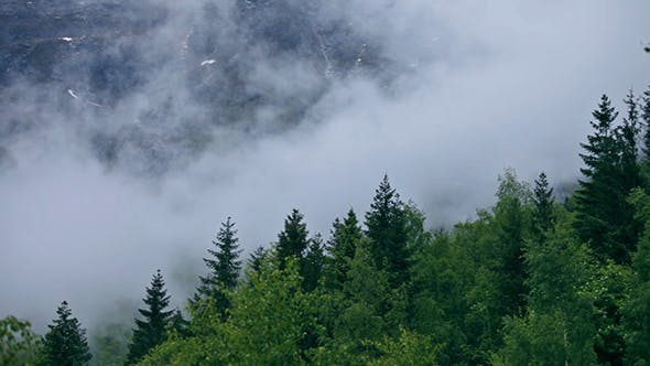 Cover Image for Mountain Forest Fog