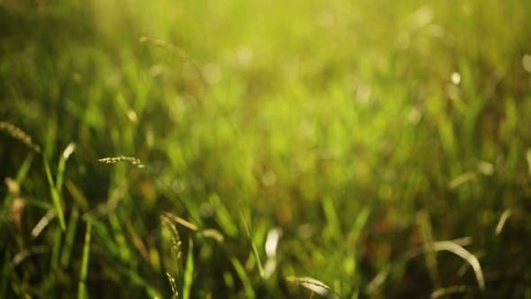Thumbnail for Green Grass, Windy