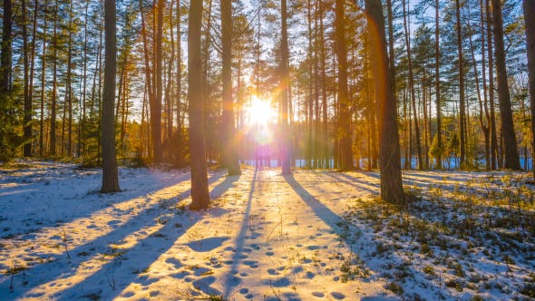 Thumbnail for Sunset In Winter Forest