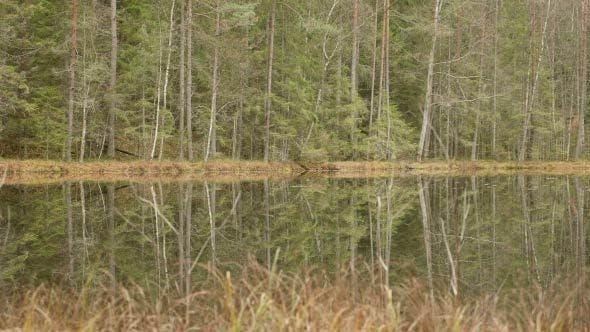 Thumbnail for Small Lake