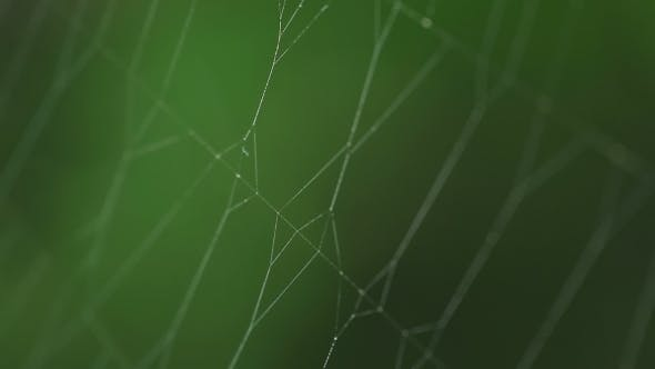 Thumbnail for Spider On The Web
