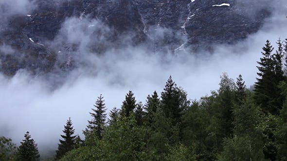 Thumbnail for Mountain Forest Fog Norway