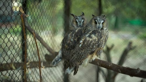 Owls In The Zoo