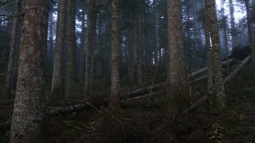 A Mystical Forest With Fog