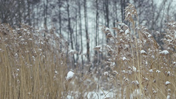 Thumbnail for Snow Falls On Dry Grass 1