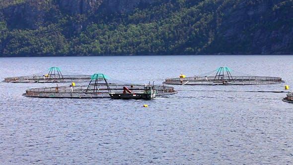 Thumbnail for Farm Salmon Fishing