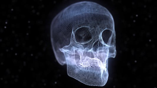 Thumbnail for Grid of Human Skull