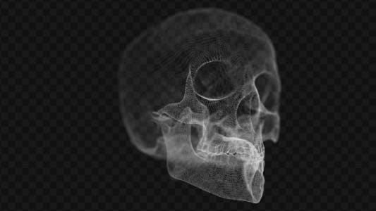 Cover Image for Grid of Human Skull 2