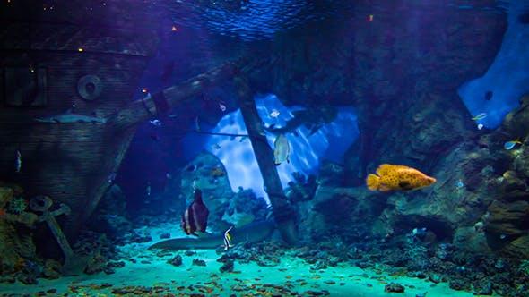Thumbnail for Fishes Oceanarium