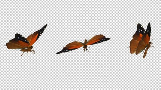 Flying Butterfly - Red Flipper