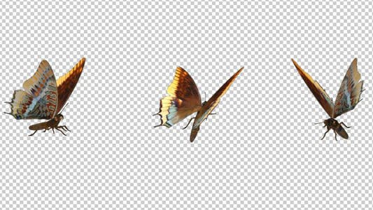 Flying Butterfly - Foxy Emperior