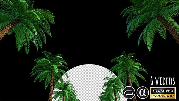 Thumbnail for Camera Moves Under Palms - 6 Pack