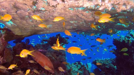 Thumbnail for Underwater Colorful Tropical Fish and Table Coral