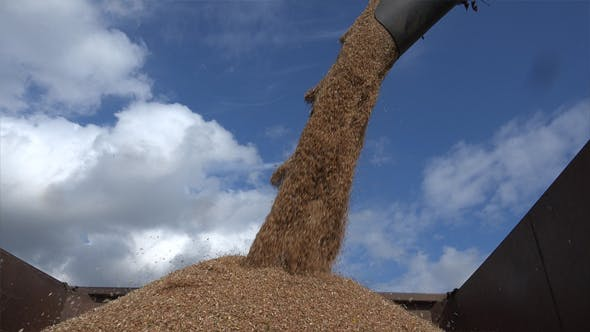 Thumbnail for Unloading Grain To The Truck 9