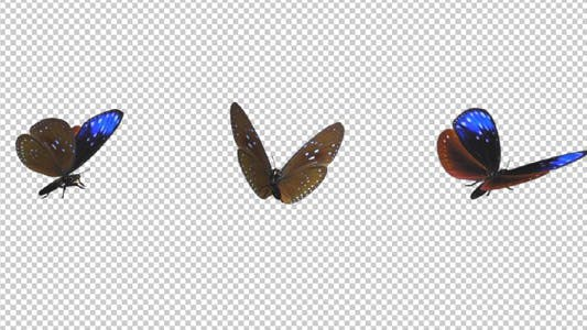 Thumbnail for Flying Butterfly - Blue Crow