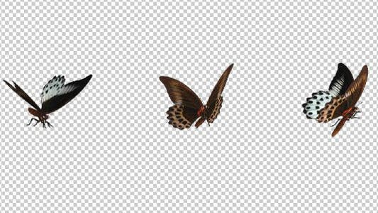 Flying Butterfly - Marble Swallowtail