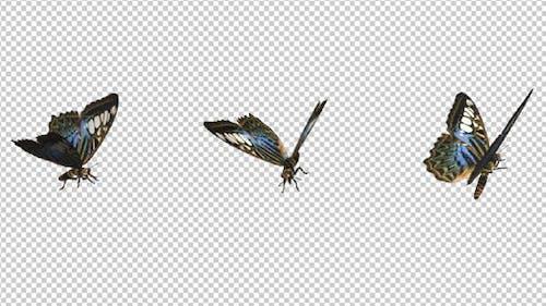 Flying Butterfly - Blue Clipper