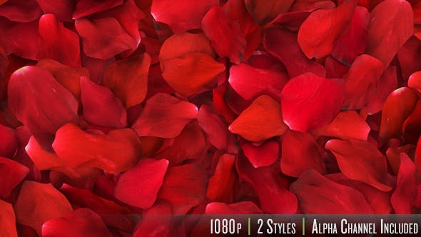 Thumbnail for Red Rose Petals Fill Screen Overlay
