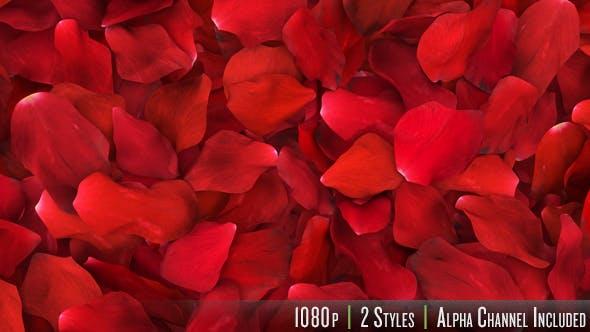 Red Rose Petals Fill Screen Overlay