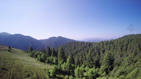 Above the Spruce Forest