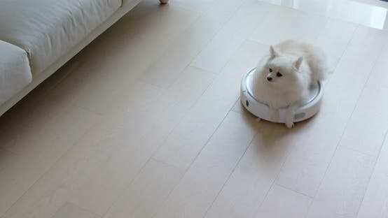 Thumbnail for Dog sit on robotic vacuum cleaner slides across the room