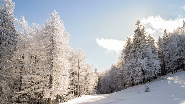 Thumbnail for Winter Landscape