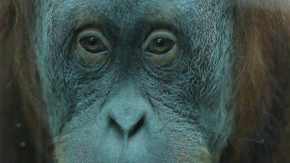 Thumbnail for Thoughtful Look Monkey