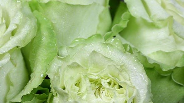 Cover Image for Rose Flower