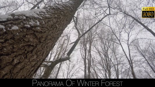 Cover Image for Panorama Of Winter Forest 4