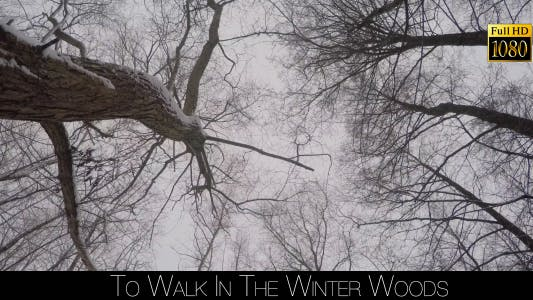 Thumbnail for To Walk In The Winter Woods 3