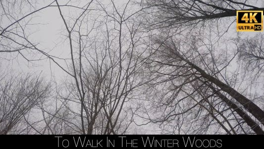 Thumbnail for To Walk In The Winter Woods 2