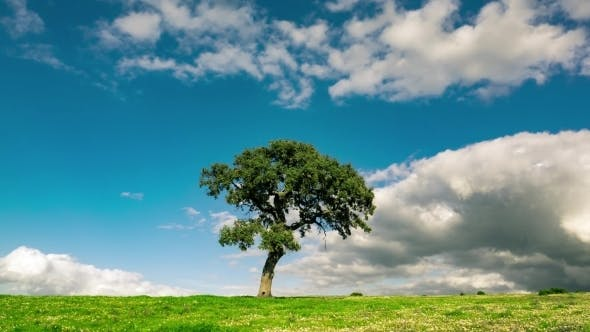 Thumbnail for Fluffy Clouds Over The Lonely Tree On Green Field