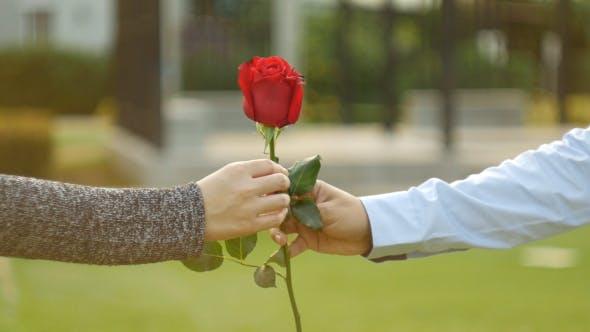 Thumbnail for Giving Rose